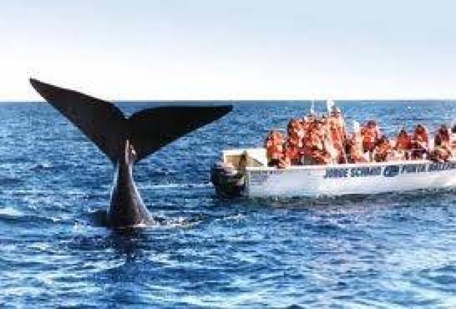 Paquete a Puerto Madryn - Hotel, excursiones y traslados