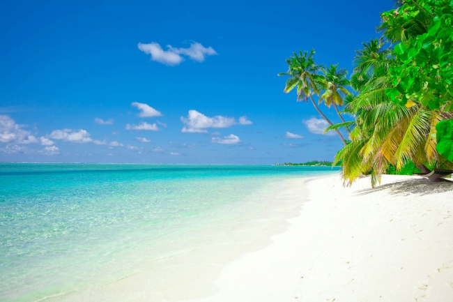 Paquete a Punta Cana en Febrero