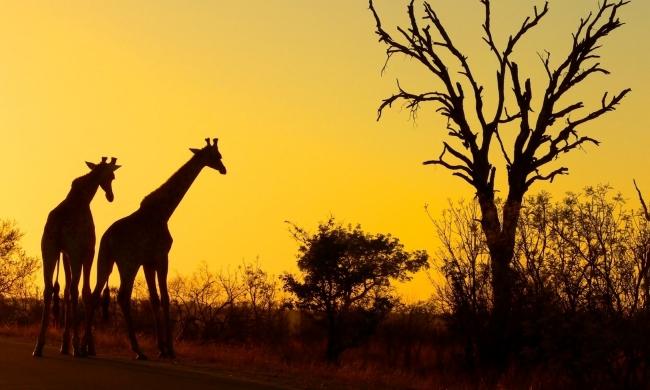 Paquete a Sudáfrica