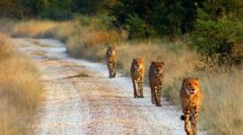 Johanesburgo – Parque Kruger – Ciudad del Cabo