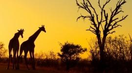 Sudafrica con Ciudad del Cabo y Safari en el Parque Kruger