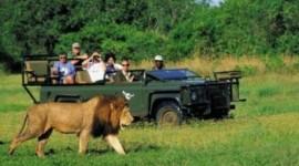 Paquete Sudafrica con reserva privada