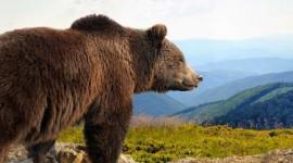 Salida grupal a Alaska desde Argentina