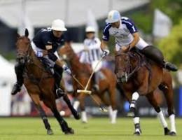 Argentine Polo Season