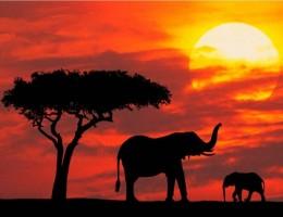 VIAJE ETIOPIA, KENIA Y TANZANIA - Salidas Grupales 2019