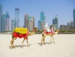 Paquete a Dubai express - Enero