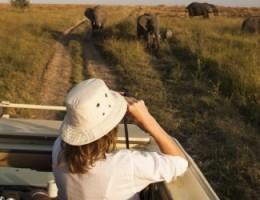Precio Paquete a Serengeti Zanzibar