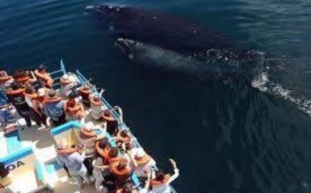 Paquete a Puerto Madryn - Viaj...