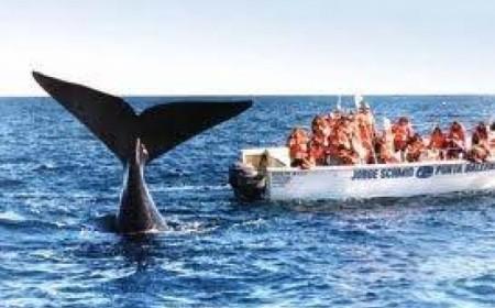Viaje a Puerto Madryn - Viajes...