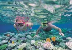 Corales en Cairm, Australia