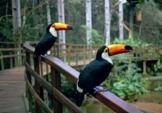 Aves en el tour a las Cataratas del Iguazu