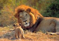 Parque Kruger