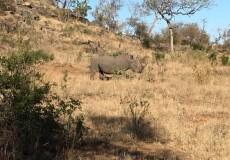 sudáfrica con 4 tourists